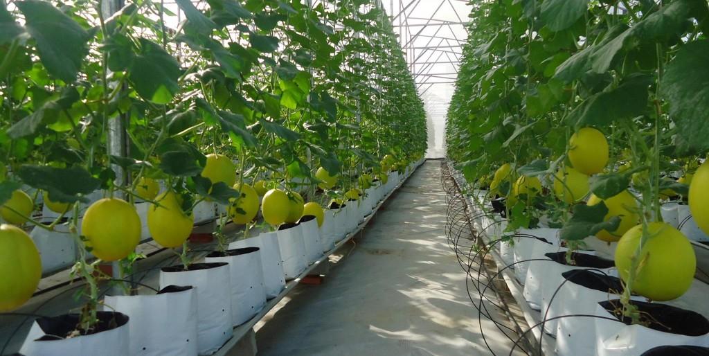 Nhật Bản đầu tư mạnh mẽ vào nền nông nghiệp Việt Nam