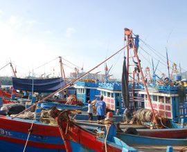 Ưu tiên ngư dân sau vụ cá chết Formusa đi XKLĐ -1