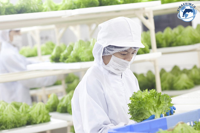 Kỹ sư nông nghiệp Nhật Bản kỹ sư trồng trọt