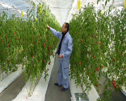 Nam làm nông nghiệp tại Nhật Bản
