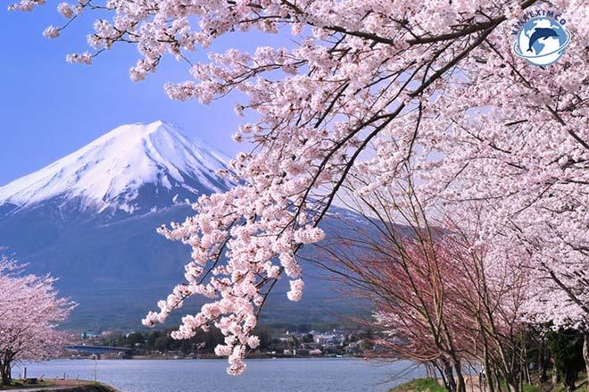 Việc làm thêm Nhật Bản