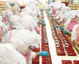 Lao động phổ thông nữ - Đóng gói thực phẩm