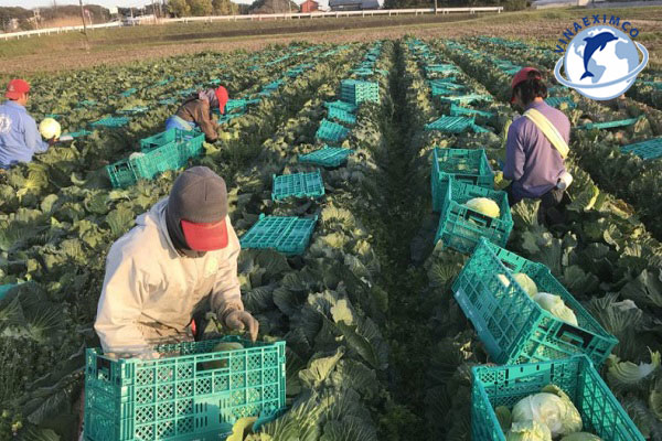 Cách tính mức lương làm thêm tại Nhật Bản