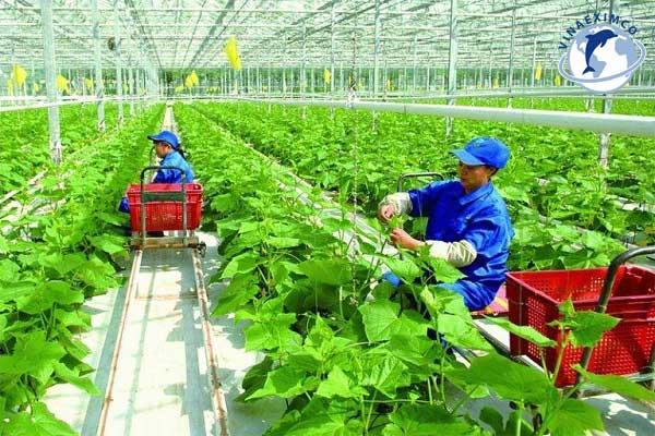 Việc làm nông nghiệp tại Nhật Bản
